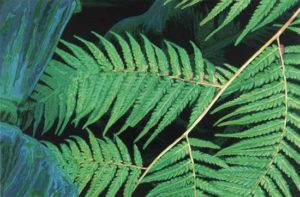 Fern, 2006 Hand-cut Coloraid paper on archival paper 18 x 28 inches; 45.7 x 71.1 cm