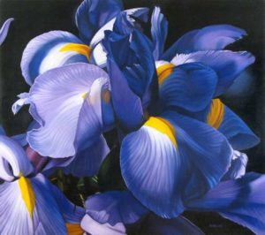 Iris, 2009 Oil on canvas 48 x 54 inches; 121.9 x 137.2 cm