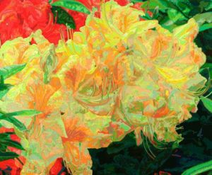 May Radiance, 2002 Hand-cut Coloraid paper on archival paper 29 1/2 x 36; 74.9 x 91.4 cm