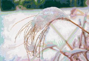 Silvergrass in Winter #1, 2005 Hand-cut Coloraid paper on archival paper 11 x 16 inches; 27.9 x 40.6 cm