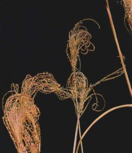 Silvergrass in Winter #2, 2005 Hand-cut Coloraid paper on archival paper 18 x 16 inches; 45.7 x 40.6 cm